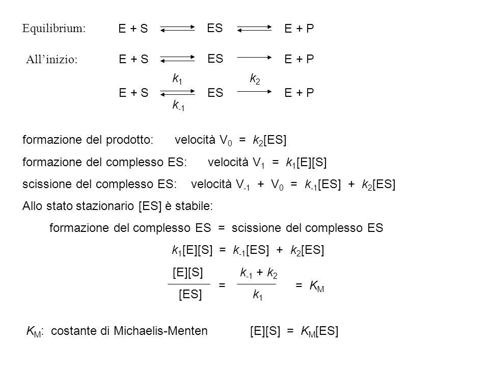 E + SES. E + P. Equilibrium: All'inizio: E + S. ES. E + P. E + S. ES. E + P. k1. k-1. k2. formazione del prodotto: velocità V0 = k2[ES]